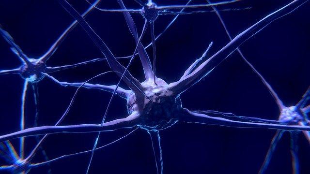 Le cerveau est-t-il capable de prendre la décision à la place de l'homme ?
